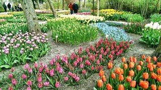 Holland Tulip Time - Flower Garden in Anna Paulowna / Poldertuin Anna Paulowna, 13 april 2019