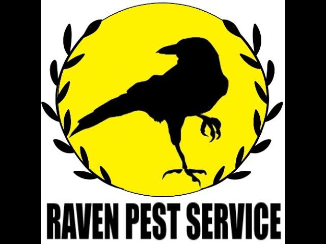 Raven Pest Service Interview