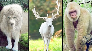 10 Rarest Completely White Animals