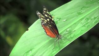 Butterflies Descend for Annual Show at Carleton University