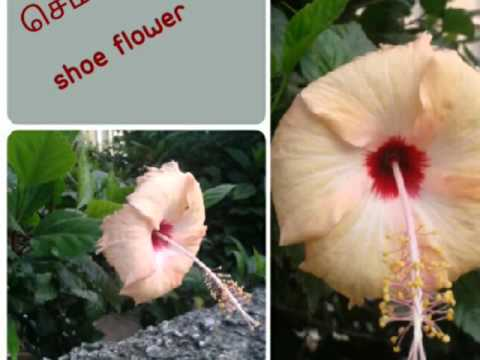 Flowers Names Tamil English With Images 2 51 To 100 Youtube