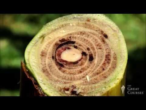 Introduction To Botany  - The Joy Of Botany