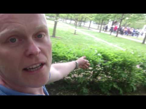Kadrioru Park!Tree fail with two casulties!  Tallinn- European City of trees 2015