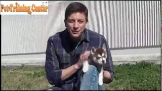 How to Potty Train Your Puppy Easily and Quickly! Everything you need to know!