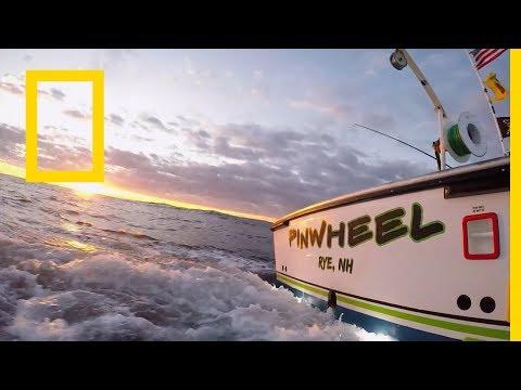 سمكة التونة العنيدة : الشمال vs الجنوب: المحيط الشرس | ناشونال جيوغرافيك أبوظبي