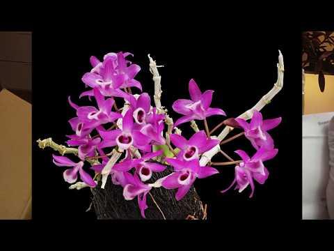 Новые орхидеи Тестирование Адаптация
