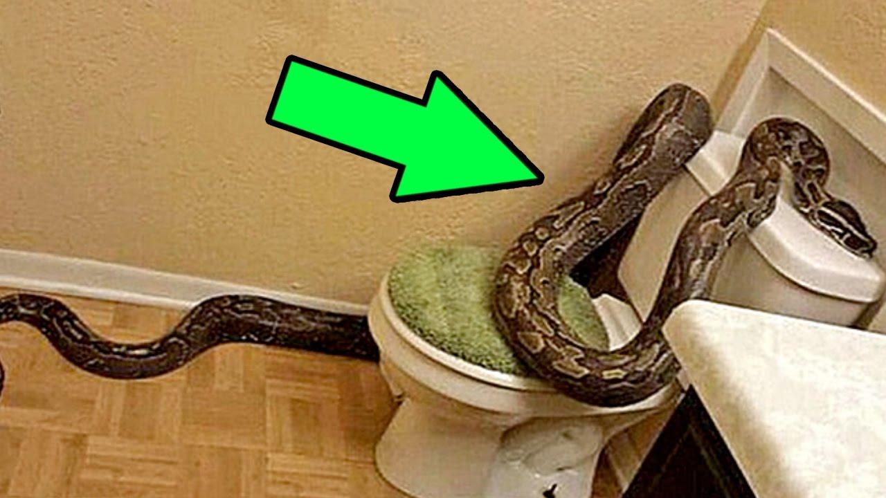 5 Существ, Которых Вы Можете Найти в Своем Туалете