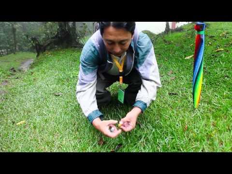 Burning Kerosene tree seed