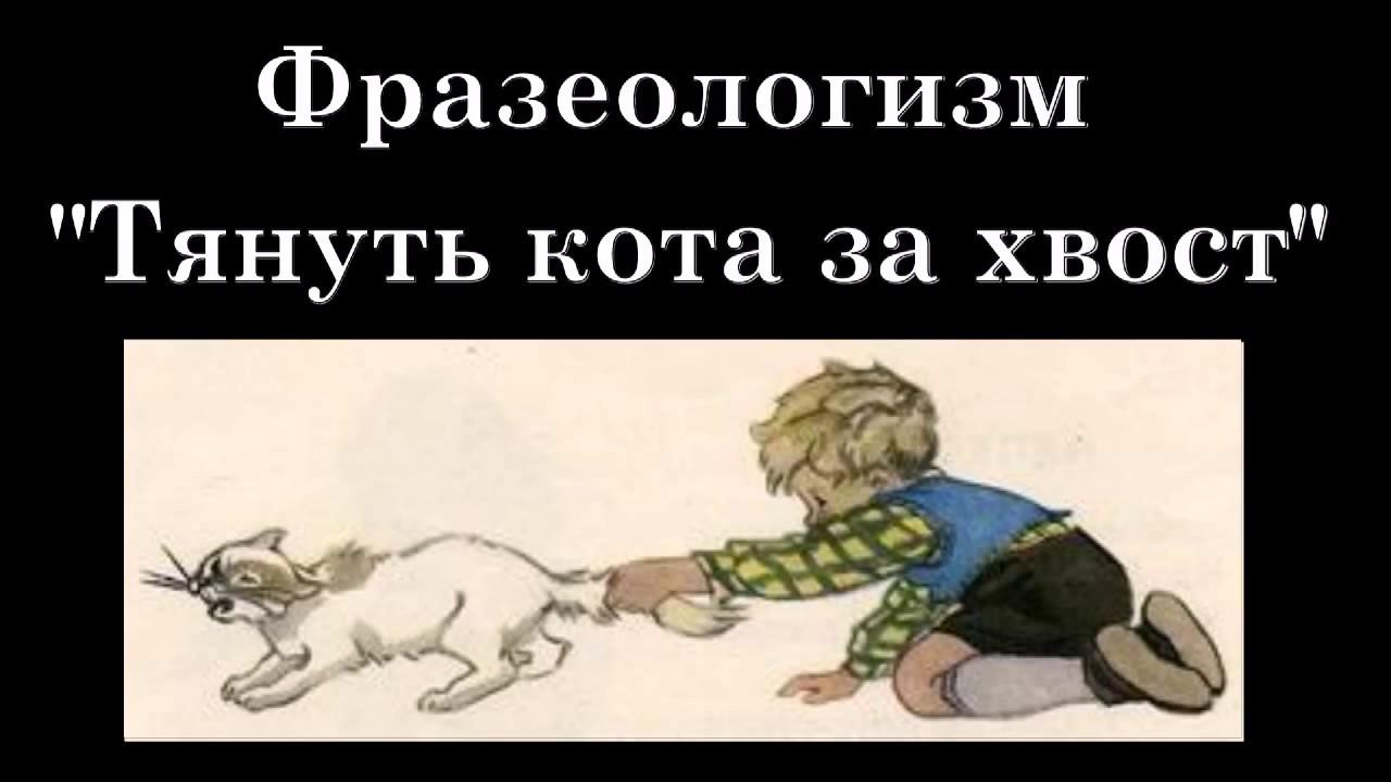 Картинка тянуть кота за яйца