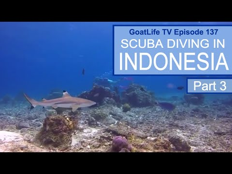 Diving in Raja Ampat - The Best Diving In The World