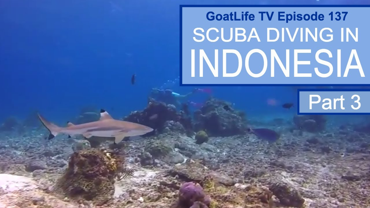 Getting Paid To Scuba Dive: My Experience Working With the
