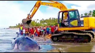Full video penguburan Ikan Paus Raksasa Terdampar, di pantai Aceh. the largest whale stranded