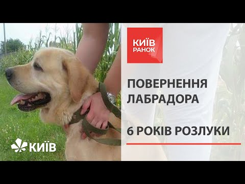 У Києві господар відшукав викраденого пса через шість років