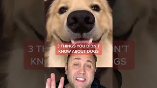 DOG FACTS - STORY #shorts