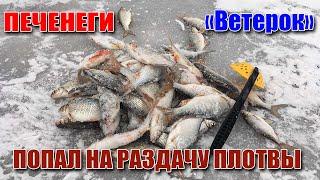 ВСЕ БЫЛИ В ШОКЕ НАДУБАСИЛ ПЛОТВЫ ВОЗЛЕ БЕРЕГА Рыбалка на Печенегах Ветерок