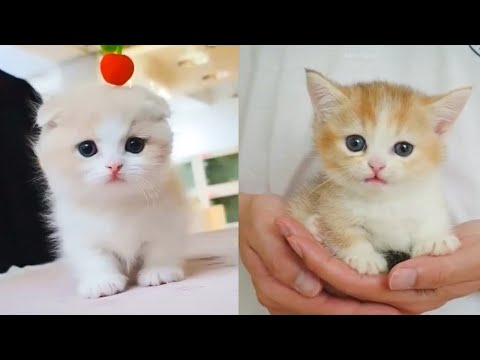 Baby Cats Cute and Funny Cat Videos Compilation.Aww Animals. en gulmeli videolar. mesiler sevimliler