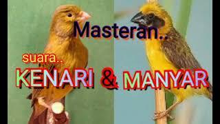 Download Masteran paling Dicari    suara Burung KENARI dan Burung MANYAR..