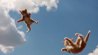 Поведение животных. Учение о падениях кошек. М. Карпинская и Д. Рогожкин. Ч. 2