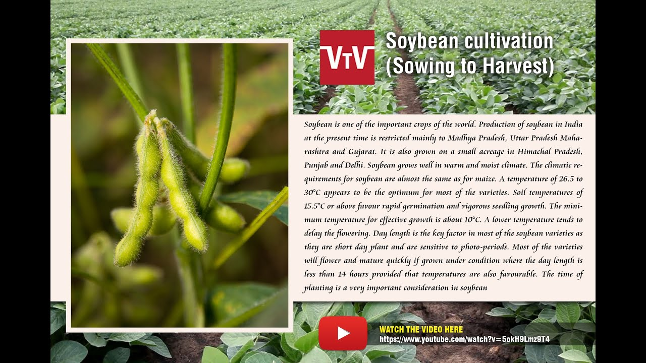soybean cultivation youtube
