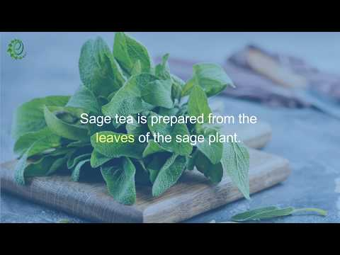 7 Incredible Benefits of Sage Tea | Organic Facts