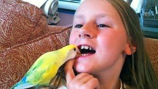 Les moyens les plus créatifs pour tirer les dents! - Drôle enfants ne Compilation