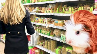 Vlog: Going to the Pet Store | Buying Guinea Pig Supplies