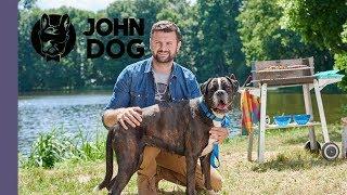 Jak oduczyć psa podkradania jedzenia? – TRENING – John Dog