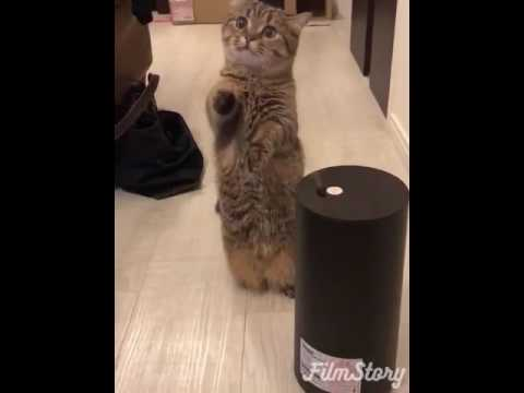 Cat VS Humidifier SO CUTE must watch