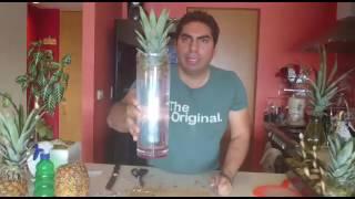 Memo y su Huerto / Cómo plantar una piña en casa