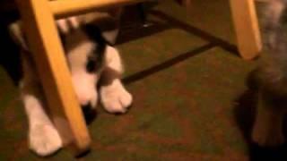 Игры котенка и щенка 2