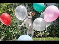 Best Funny Dogs vs Balloons Compilation 2014 || AHF