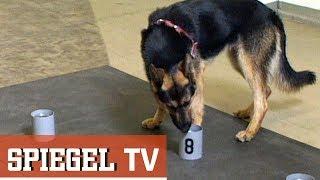 Die Geruchs-Stasi: Schnüffel-Staat DDR (SPIEGEL TV 1990)