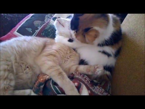 CGI Illuminati Cats: Bravo Sahara Programming (Flat Earth Fun)  v.2