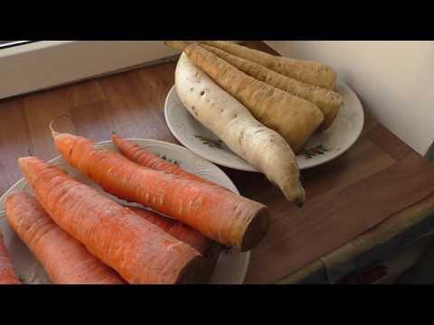 Замеряю и завешиваю морковь, пастернак и дайкон после хранения.