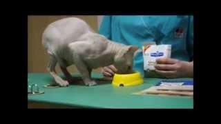 HIlls Metabolic PD - решение проблем ожирения у кошек и собак(, 2014-04-21T08:33:29.000Z)