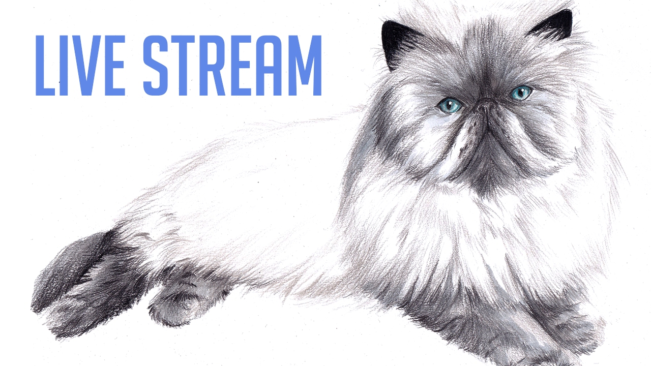 Drawing a persian cat with pencil