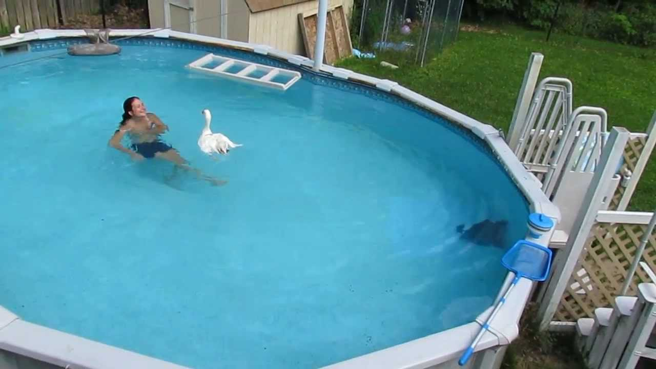 Pet Goose Oliver Swims In Swimming Pool With Human Mom Youtube