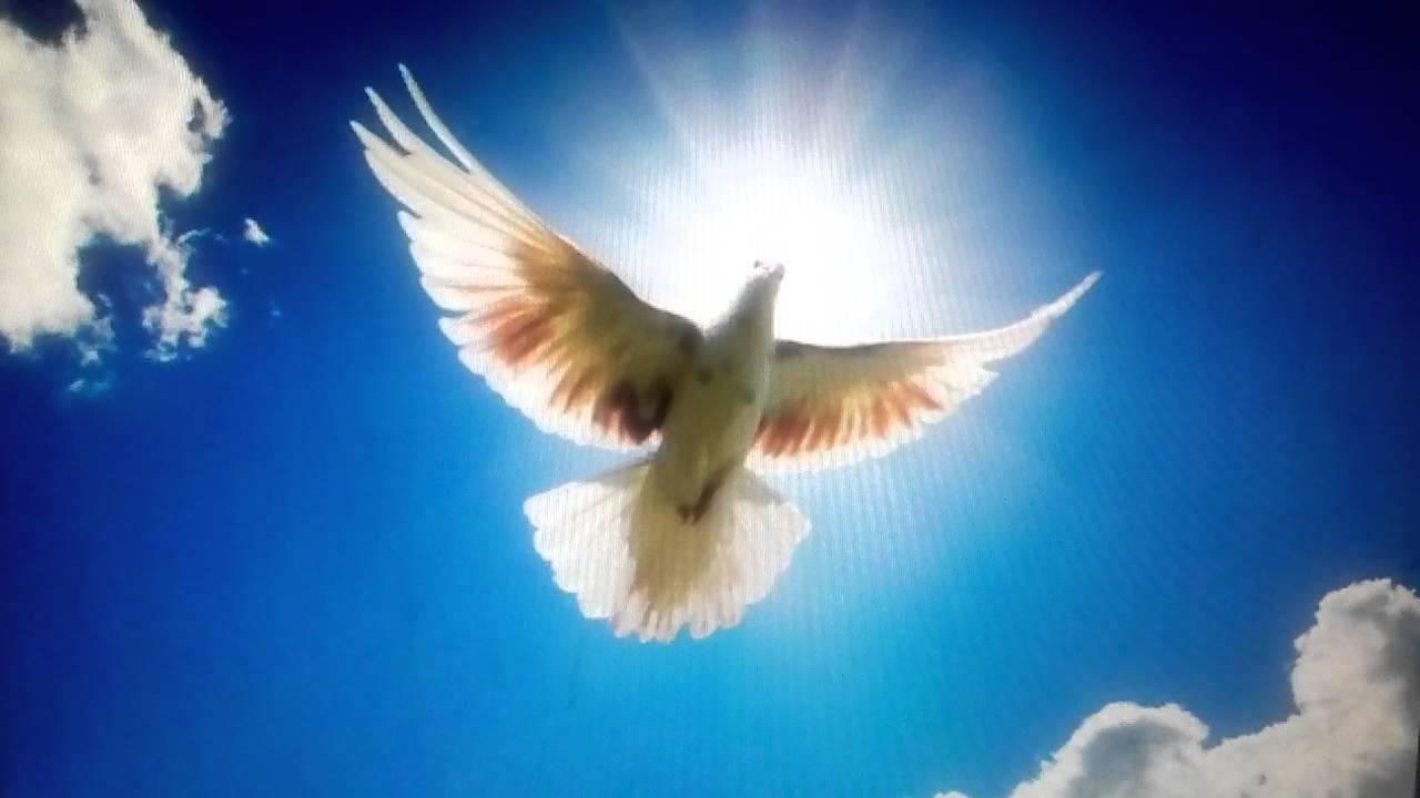 vuela paloma palomita