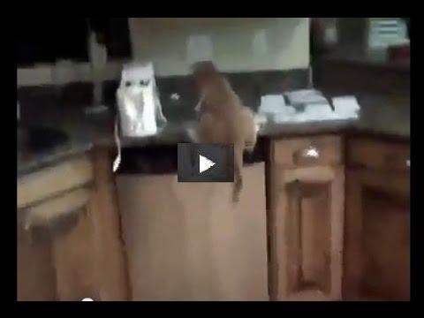 Вопрос: Как отучить кошку прыгать на стол?