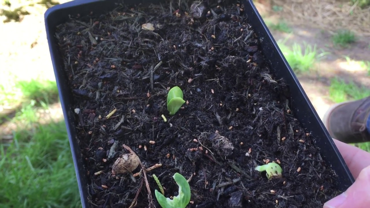 Que semer et planter en juin au potager ? - YouTube