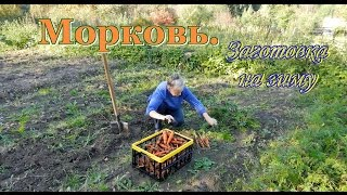 Заготовка моркови на зиму. Видео рецепты от бабки (Борисовны)