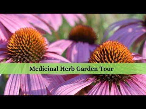 Medicinal Herb Garden Tour