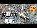 OBSERVING CUTE DEERS vlog