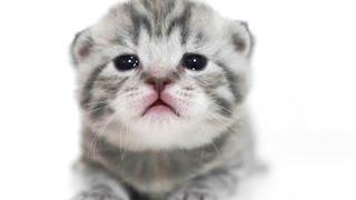Новорожденный котенок открыл глаза. The newborn kitten opened its eyes. Cute kittens
