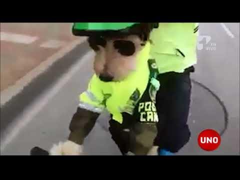 Top Secret: El Policía canino que recorre Bogotá en bicicleta
