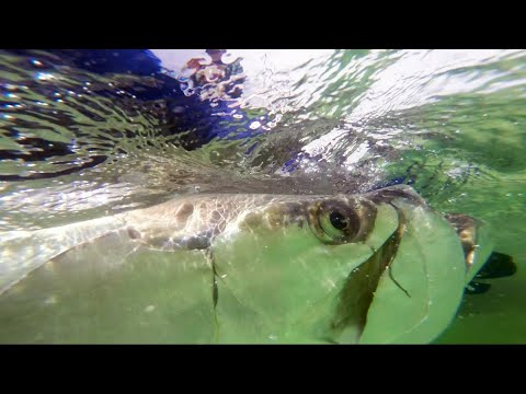 Most Epic Tarpon Fight Bridge Fishing in the Florida Keys