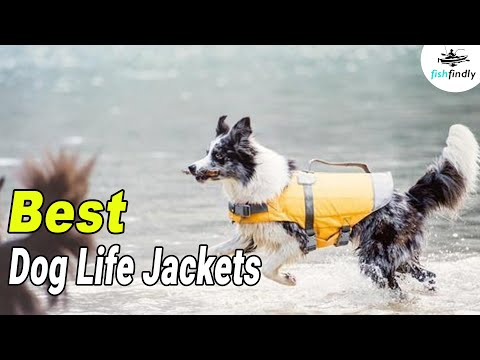 Best Dog Life Jackets In 2020 – Your Pets Safety Essentials!