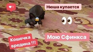 Как купать сфинксов?/ Уход за лысой кошкой)/Нюша купается🐈❤️