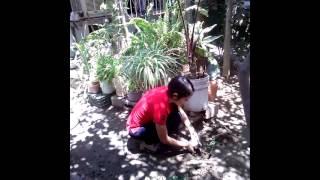 Planta un árbol Prepa Mochis Cota Dominguez 3-13