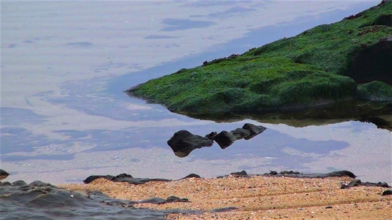 Relax - Calm sea with small algae on the ripple on the beach